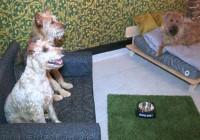Ξενοδοχείο πέντε αστέρων για… σκύλους!