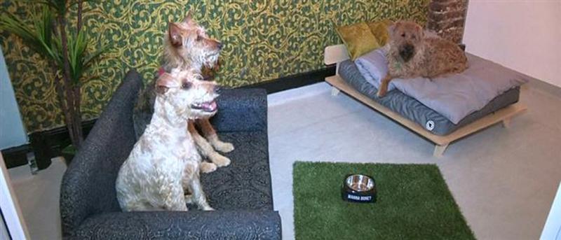 Ξενοδοχείο για σκύλους