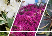 Η ταυτότητα τεσσάρων φυτών που τα συναντάμε συχνά, μας αρέσουν και μας συντροφεύουν στον κήπο και όχι μόνο