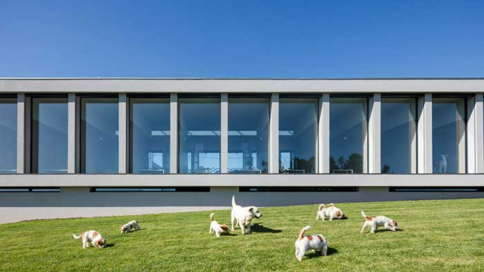 Ξενοδοχείο για γάτες και σκύλους στην Πορτογαλία